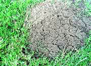 Simply Greener can help control fire ants for up to one year