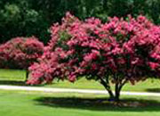 Lawn Care | Tree and Shrub Care