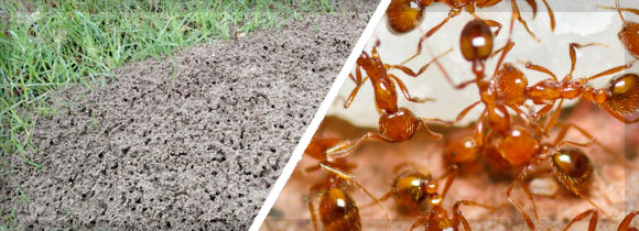 SGL-170319-Email-FireAnt-Banner